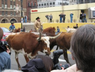 Chrysler Dodge Ram cattle drive in Detroit